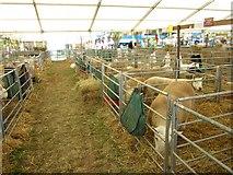 NT1473 : Sheep pens at the Royal Highland Show by Graham Robson