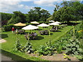 SW8458 : Lawn at Trerice with cafe tables and umbrellas by David Hawgood