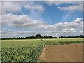 TM2390 : Path through wheat crop field by Evelyn Simak
