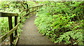 J4078 : Path and ferns, Glenlyon, Holywood (June 2014) by Albert Bridge
