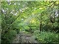 SU1028 : Old Shaftesbury Drove at Salisbury Racecourse by Derek Harper