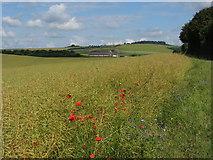 SU1872 : Fields near Ogbourne St Andrew by Gareth James