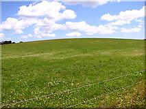 TM4077 : Pasture beside Blyford Lane by Evelyn Simak
