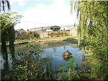TQ4312 : Pond and Duck House, Ringmer Park by Paul Gillett