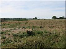 TL4259 : North West Cambridge site by Hugh Venables