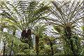 NT2475 : Glasshouse, Edinburgh Royal Botanic Garden by William Starkey