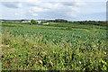SW5132 : Millet fields near Bowgyheere Farm by Bill Boaden