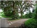 SU6226 : Triangular road junction, Brockwood Bottom by Christine Johnstone
