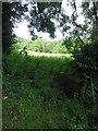 ST7792 : A walk round the Newark Park estate by Virginia Knight