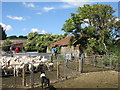 NT4148 : Sorting the sheep at Howliston by M J Richardson