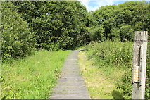 NY0265 : Path to the New Caerlaverock Castle by Billy McCrorie