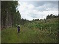 NY5524 : Footpath at Kitt Gill, Melkinthorpe Wood by Karl and Ali
