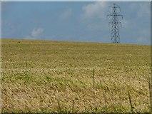 SU6230 : Pylon above a field of barley by Christine Johnstone