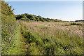 TA2370 : Footpath, Flamborough, Yorkshire by Christine Matthews