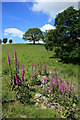 SO2958 : Foxgloves in the rocks by Des Blenkinsopp
