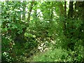 SU6221 : Garden Hill Lane by Christine Johnstone