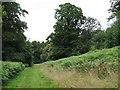 SX9584 : Track in Powderham Old Plantation by Stephen Craven