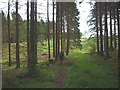NY5524 : Footpath into Kitt Gill, Melkinthorpe Woods by Karl and Ali