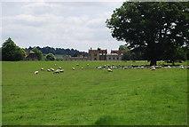 TQ5244 : Sheep, Penshurst Park by N Chadwick