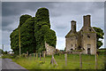M9652 : Castles of Connacht, Gort (Lecarrow), Roscommon (1) by Mike Searle