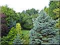 SJ6966 : Garden at The Sandhurst Hotel by Bob Harvey