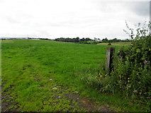 H4178 : An open field, Gortnacreagh by Kenneth  Allen