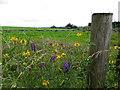 H4079 : Wildflowers, Gortnacreagh by Kenneth  Allen