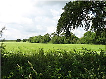 N4118 : Farmland east of Killeigh by David Purchase