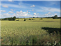 TL6144 : Arable land by Shudy Camps by Hugh Venables