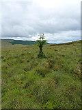SH7641 : A weird tree by Richard Law