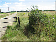 TF6304 : Footpath to Bexwell Road by Evelyn Simak