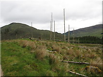 NN1067 : Desolate scene of tree destruction by Peter S