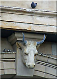 NS6064 : A bull and a pigeon by Thomas Nugent