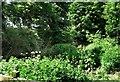 SU5578 : Plants in Grim's Ditch by Des Blenkinsopp