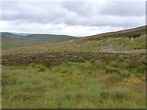SH8143 : The western slopes of Foel Wen by Richard Law