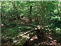 SU5678 : Grim's Ditch in Foxborough Copse by Des Blenkinsopp