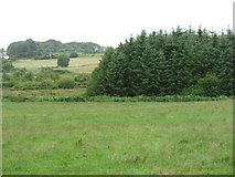 M3874 : Woodland east of Claremorris by David Purchase
