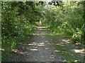 TQ0074 : Overgrown track, Wraysbury gravel pits by Alan Hunt