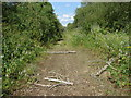 TQ0075 : Disused gravel pit track by Alan Hunt