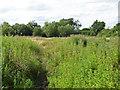 SU8376 : Path through scrubland by Alan Hunt