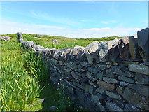 NR3587 : Dry-stone dyke, Oronsay by Alpin Stewart