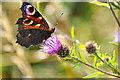 SS7221 : North Devon : Butterfly by Lewis Clarke