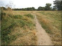 TQ1672 : Path on Ham Lands by David Howard