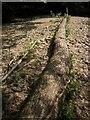SX8079 : Fallen alder by the Bovey by Derek Harper