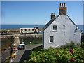 NT9167 : Coastal Berwickshire : St Abbs by Richard West