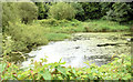 J4468 : Old mill pond, Comber - July 2014(2) by Albert Bridge