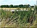 SU1578 : Pillbox (1) Beranburh field, Wroughton, Swindon by Brian Robert Marshall