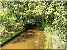 SD9151 : Leeds and Liverpool Canal, East Marton by David Dixon