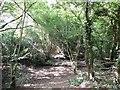 TQ3120 : Leylands Wood by Paul Gillett