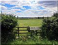 SP6707 : Fields at New Village Farm by Des Blenkinsopp